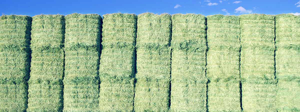 All Grades of Global Select™ Alfalfa Hay