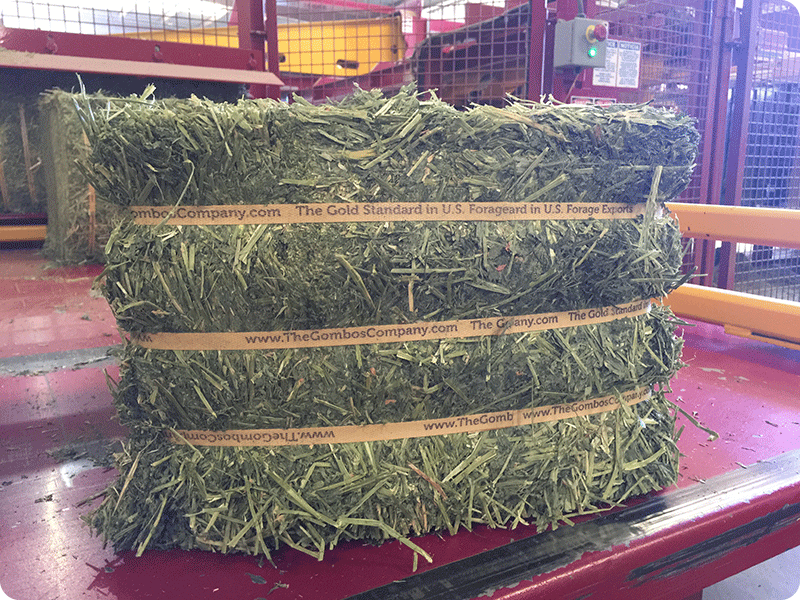 25-30Kg Natural Press Fresh Flake small bale alfalfa from The Gombos Company
