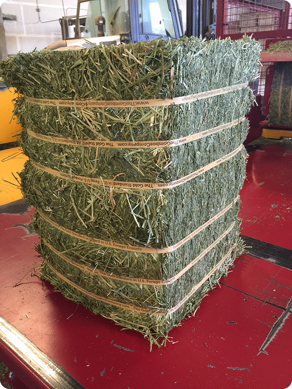 55-60Kg Natural Press Fresh Flake small bale alfalfa from The Gombos Company