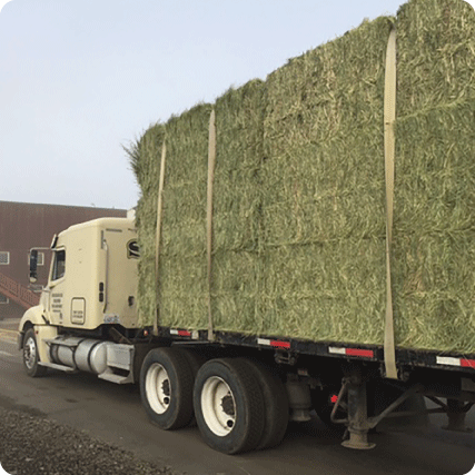 Alfalfa-Export-Quality-Control-Step-Two-Inbounding