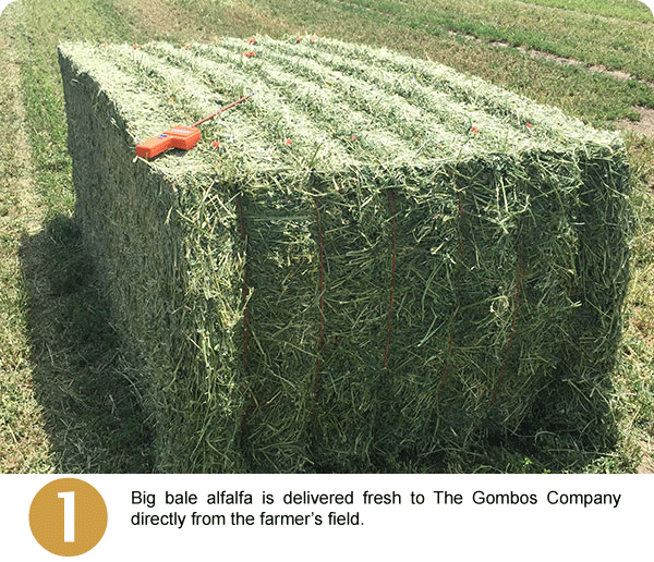 Step 1: Big bale alfalfa is delivered fresh to The Gombos Company directly from the farmer's field.